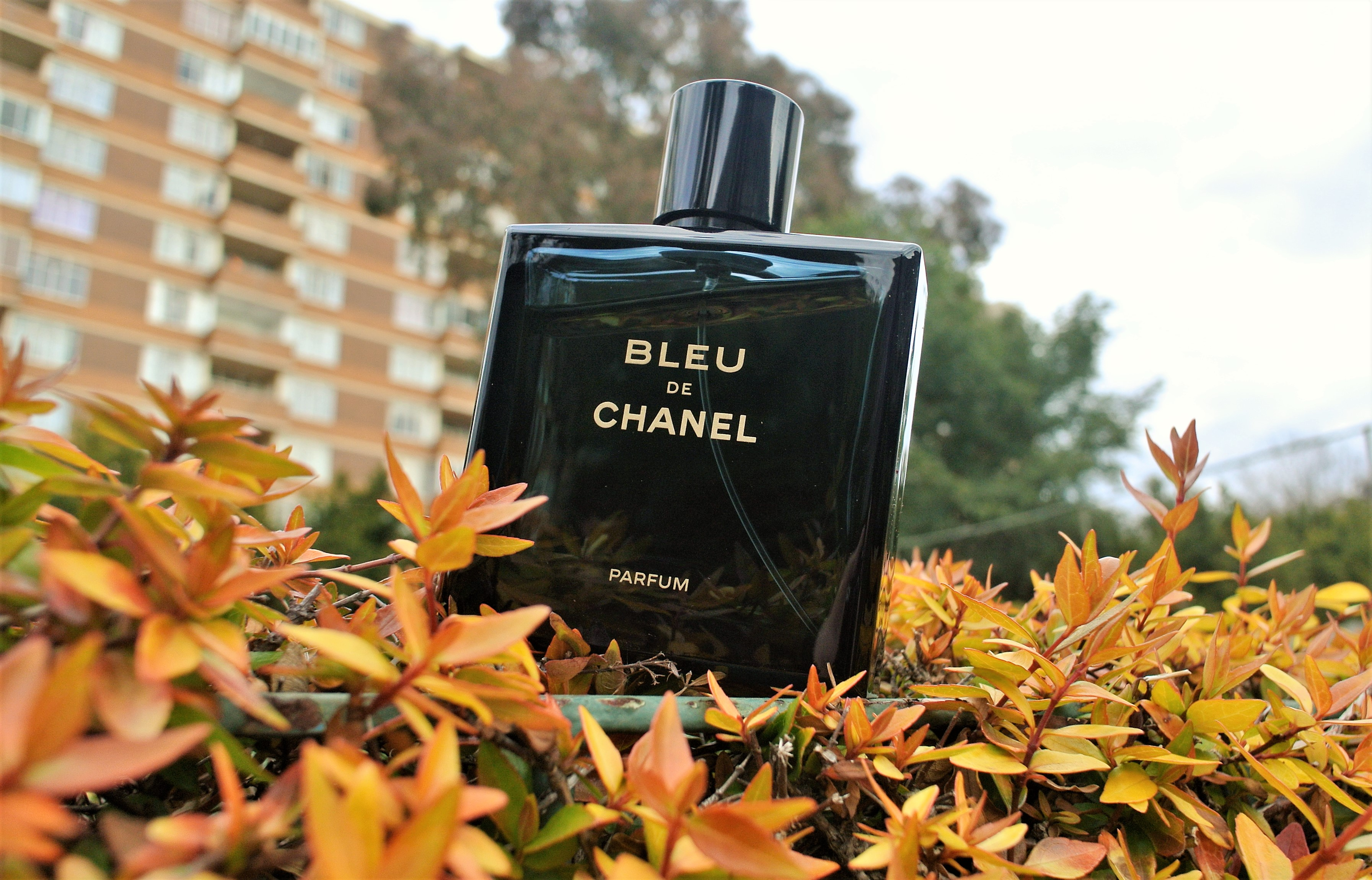 f4c3325422 Bleu de Chanel Parfum Review: What The New Version Has To Offer